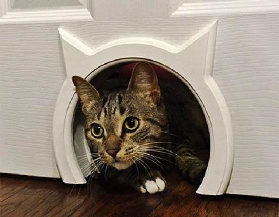 prohod-v-dveri-dlya-kota